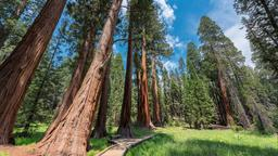 Sequoia National Park hotels